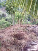5.7 hectares clean titled highland farm