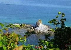 malapacao island beachfront timberland property