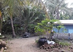 279 square meters lot for sale in brgy. reserva, baler, aurora