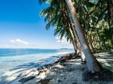 good deal beach lot for sale siargao, surigao del norte 4,091 sq. m