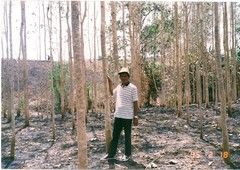 agricultural or residential land - rubber trees, gmelina trees, rice,