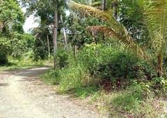 1.6 hectares coconut farm flat terrain davao de oro
