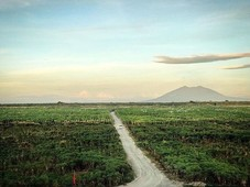 the greenways alviera